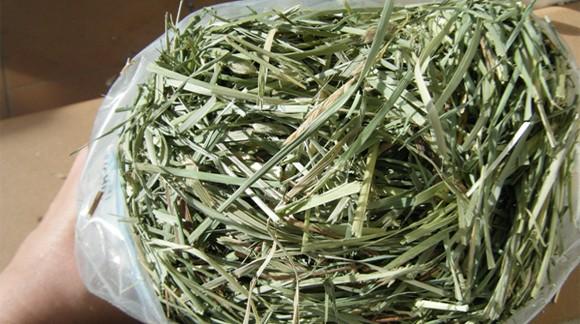 EL HENO ORCHARD GRASS, de gran valor nutricional.