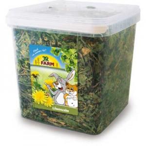 JR FARM Diente de leon en cubo para conejos y roedores