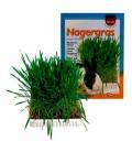 Trixie Bandeja de hierba para cultivar comestible