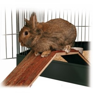 Trixie Puente de madera para jaulas de conejos y cobayas