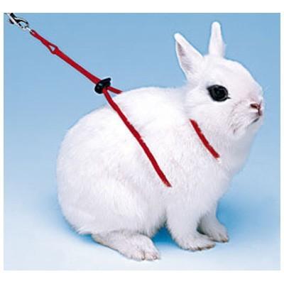 Ferplast Arnes y correa ROD para conejos y cobayas