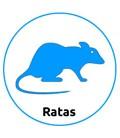 Tienda para Ratas