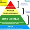 PIRAMIDE ALIMENTICIA DE LOS HERBÍVOROS: Conejos, Cobayas, Chinchillas y Degús