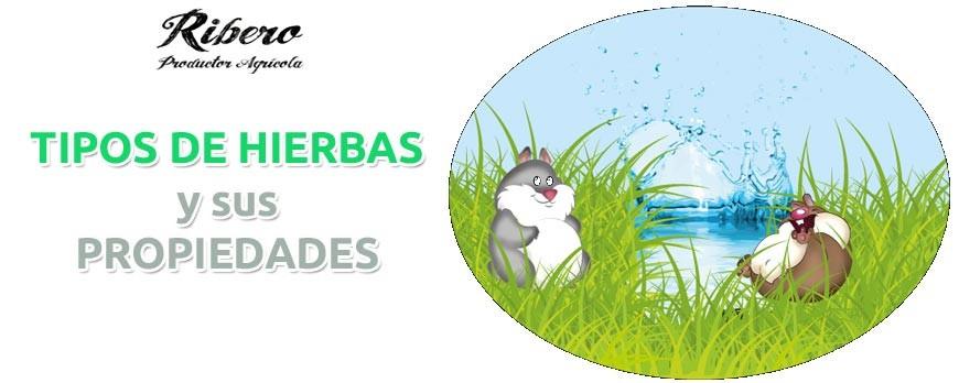 TIPOS DE HIERBAS Y SUS PROPIEDADES: PARA CONEJOS, COBAYAS Y ROEDORES